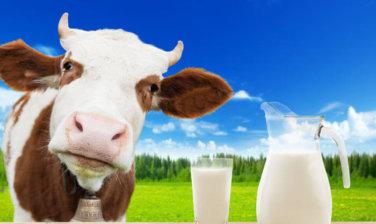 https://www.kendamil.cz/wp-content/uploads/2017/11/Benefits-Of-Cow-Milk-According-To-Ayurveda-376x224.jpg